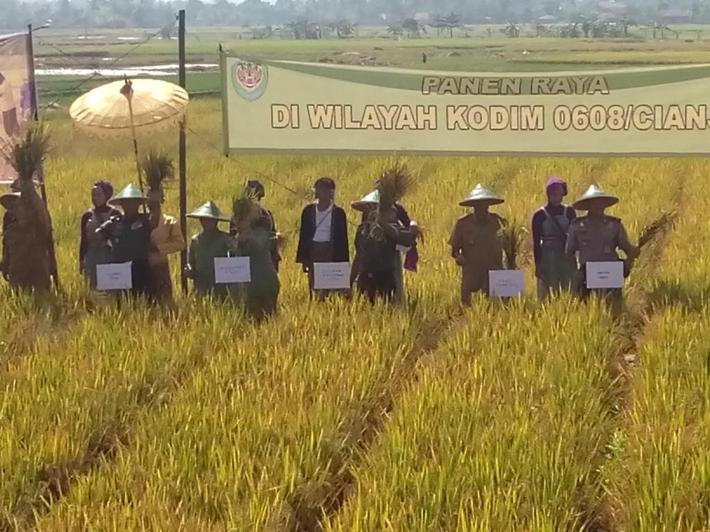 PANEN RAYA: Petani diharapkan memiliki ide dan terobosan untuk meningkatkam mutu beras hingga menembus internasional. Foto: Riki/Pojoksatu.id