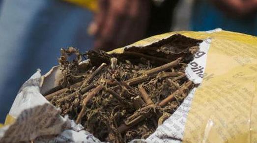 Gila…Pengguna Narkoba Ini Simpan Batang Pohon Ganja di Rumahnya ...
