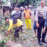 EVAKUASI: Aparat kepolisian dibantu warga saat mengevakuasi pohon Gutha Parca yang tumbang di Kampung Cipetir, RT 09/02, Desa Cicareuh, Kecamatan Cikidang. Ist