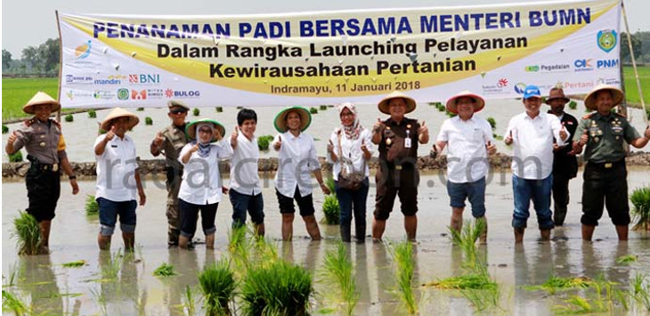 Menteri BUMN, Rini M Soemarno, usai melakukan tanam padi bersama di Kecamatan Sliyeg Kabupaten Indramayu, Kamis (11/1). FOTO:UTOYO PRIE ACHDI/RADAR INDRAMAYU