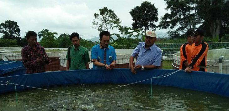 Caption: Kabid Budidaya Air Tawar BBPBAT, Carlos mengajak peserta meninjau budidaya ikan lele insentif dengan sistem bioflok./Foto: Istimewa