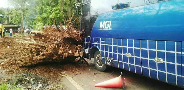 Akar Pohon Penyebab Kecelakaan Maut di Warungkiara