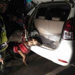 PERIKSA KENDARAAN: Anjing Pelacak melakukan pemeriksaan pada kendaraan pribadi saat KKYD.