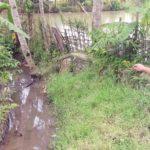 SALURAN AIR : Seorang petugas Desa Sirnaresmi menunjukan saluran irigasi Cipeundey yang mengalami pendangkalan