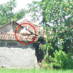 Sarang tawon di rumah warga Desa Sukamanah, Kecamatan Mande, Kabupaten Cianjur.