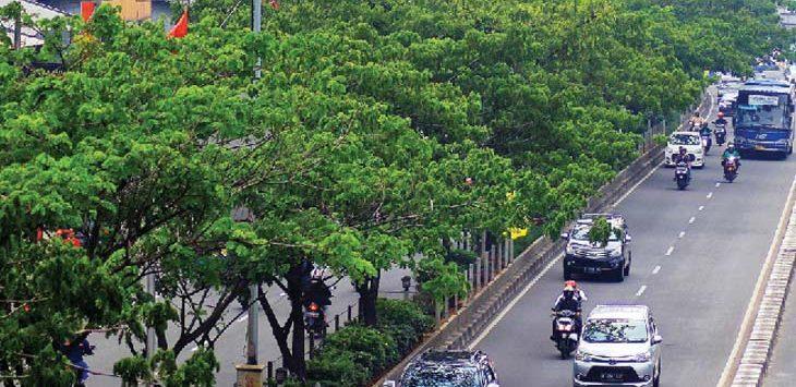DILAKUKAN PENGAWASAN: Sejumlah kendaraan saat melintas di dekat pepohonan yang berada di kawasan Jalan Margonda Raya. Dinas Lingkungan Hidup dan Kebersihan (DLHK) Kota Depok rutin melakukan pengecekan pohon di area jalan protokol. Ahmad Fachry/Radar Depok