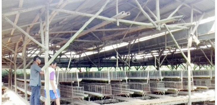 Sejumlah pekerja CV. Lestari Unggas Jaya, saat membersihkan lokasi kandang ayam.