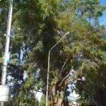 pohon patah