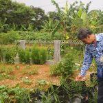 Dadun Suparman memperliohatkan tanaman di Kelurahan Muarasari, Selasa (17/4/2018)./Foto: Adi