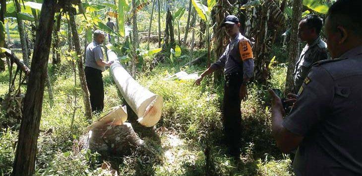 TEWAS: Pohon yang menimpa Dede Rohendi, hingga Ketua RW 06 Dusun Nagrog Desa Sukamaju Kecamatan Rancakalong, tewas. TOHA HAMDANI/RADAR SUMEDANG
