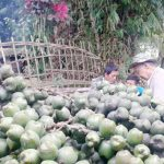 PUSAT CARULUK: Warga Kampung Kedung Hilir sedang memproduksi kolang kaling saat bulan Ramadan. Foto: Fadilah Munajat/Radar Cianjur