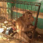 Ini Monyet Penyerang Satpam Perumahan PML
