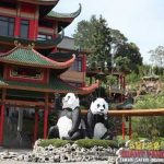 Panda-di-Taman-Safari-Indonesia