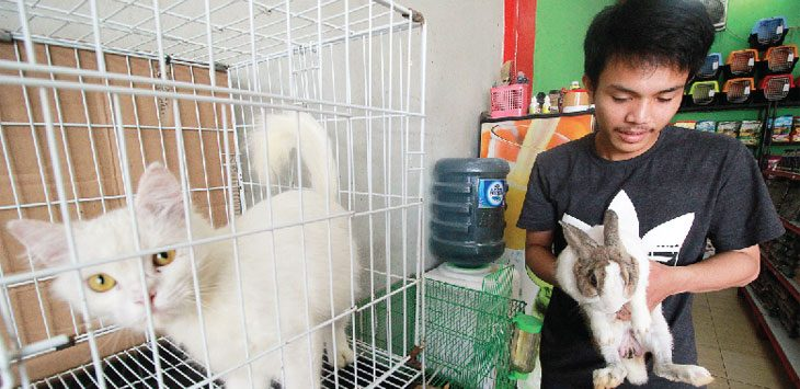 JASA PENINITIPAN HEWAN: Pekerja sedang melihat kondisi hewan yang dititipkan di Redz Petshop Jalan Margonda Raya, Selasa (12/06/18). Ahmad Fachry/Radar Depok