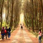 Hutan Pinus Gunung Pancar Bogor