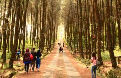 Berwisata Keluarga Wisata Alam Hutan Pinus Bogor