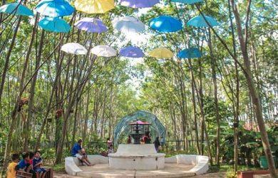 Padi Emas Sentul Bogor Tempat Wisata Baru Di Bogor Yang