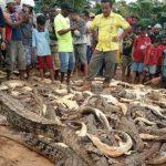 Pembantaian Buaya di Indonesia Jadi Sorotan Dunia