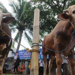 Penjualan Hewan Kurban di Bogor