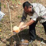 PT. SPV tanam pohon di sepanjang pinggiran Sungai Citarum