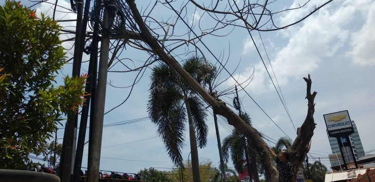 Warga sedang menunjukkan pohon tumbang yang menimpa kabel listrik di Jalan Tuparev, Kabupaten Cirebon. Alwi/pojokjabar.com