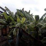 Kerusakan pasca hujan di Honduras
