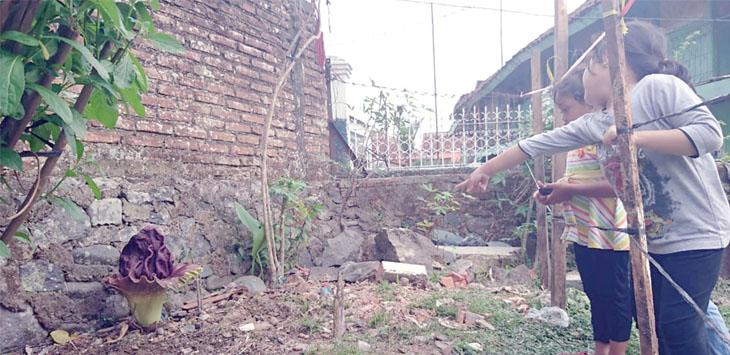 Sejumlah anak-anak saat menyaksikan bunga rafl esia yang tumbuh di lahan kosong di Gang Limus RT 1/2, Kelurahan Cisarua Kecamatan Cikole.