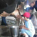 Wisata Sekolah Sentulfresh Education Farm