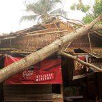 TUMBANG : Akibat angin puting beliung di Dusun Cisitu Desa Cisitu Kecamatan Cisitu, Sabtu (9/12) malam. Sejumlah sejumlah rumah alami kerusakan. Dua diantaranya rusak parah tertimpa pohon tumbang. AGUN GUNAWAN/RADAR SUMEDANG