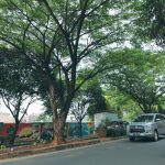 pohon-rindang-di-kawasan-Jalan-Juanda,