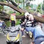 Arus lalulintas di Jalan Situgunung RT 10/02, Desa Gunungjaya, Kecamatan Cisaat, Kabupaten Sukabumi nyaris lumpuh akibat tertutup pohon tumbang, Selasa(11/12/2018).