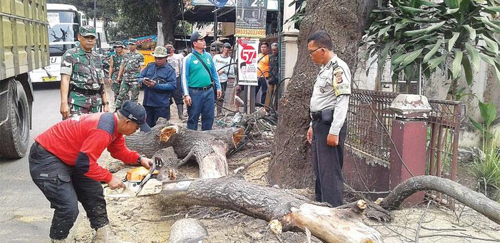 TEBANG POHON: Unsur polisi dan TNI saat mengawasi penebangan pohon keropos di pinggir jalan raya. Toha Hamdani/Radar Sumedang.