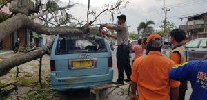 Pohon tumbang di jalur Pantura Plumbon dimana angkutan umum tertimpa ranting pohon (kirno)