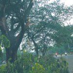 pohon-tumbang-di-depok