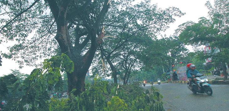 HARUS LEBIH WASPADA : Tampak terlihat ranting-ranting pohon tumbang di kawasan Grand Depok City, kemarin. Pemerintah kota melalui dinas terkait diminta agar selalu rutin mengecek kondisi pohon-pohon yang sudah rawan tumbang. Ahmad Fachry/Radar Depok