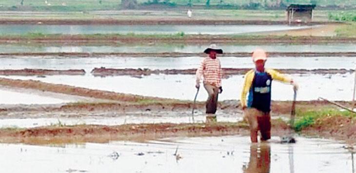 Sebagian petani Purwakarta belum mulai menanam padi meski jadwal yang ditentukan sudah lewat. Gani/Radar Karawang