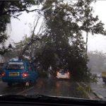 Pohon tumbang akibat hujan deras dan angin kencang di Bogor