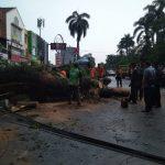 Pohon tumbang di Taman Peranginan Jalan Sudirman Kota Bogor (ikrar)