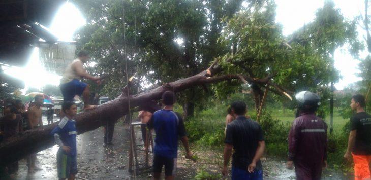 Masayarakat, TNI Polri dan BPBD Kabupaten Cirebon tengah mengevakuasi pohon tumbang yang menutupi jalan Pangeran Antasari Plumbon. Kirno/pojokjabar