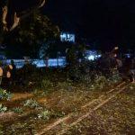 Pohon tumbang Kota Cirebon