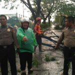 Pohon yang bertumbangan ke badan jalan di jalan protokol di Kabupaten Bogor (rishad)