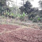Lahan-Pertanian-Padi