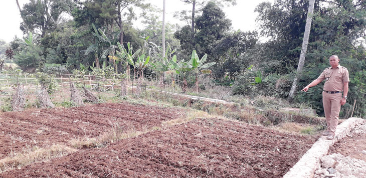 Kepala Desa Jambenenggang, Ojang Apandi, saat menunjukan lahan pertanian warga yang ditanami tanaman palawija di Kampung Pasir Kambing, Desa Pasirhalang, Kecamatan Sukaraja.