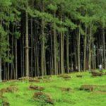 Pembangunan-Pemakaman-di-Kawasan-Hutan