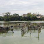 Situ-Rawa-Kalong