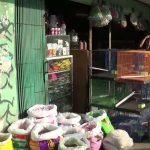 Ikan hias yang bermatian akibat padamnya listrik di Kabupaten Bogor hingga Senin (cek)