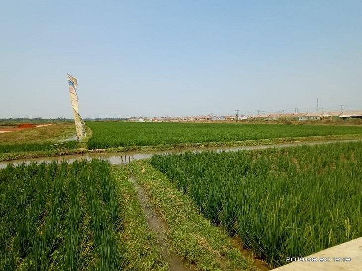 Sawah produktif 2 desa di Kabupaten Karawang