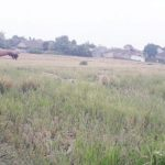 Lahan-Pertanian-di-Cisaat