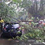 Mobil yang tertimpa pohon di Jalan Kesehatan Kota Bogor Rabu sore (ist)