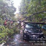 Mobil yang tertimpa pohon di Jalan Kesehatan Kota Bogor (ist)